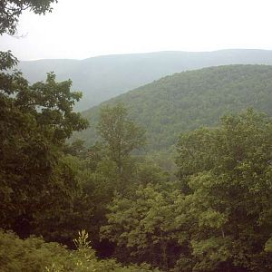 George Washington national forest.